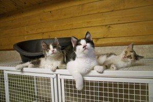 Kitten therapy – a prescription for stress?