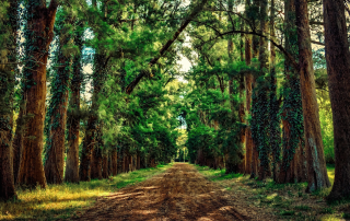 Deep Pathway Through Forest